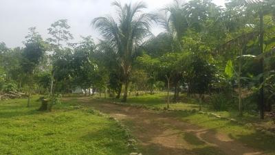 Lote de terreno en el sector de palomino