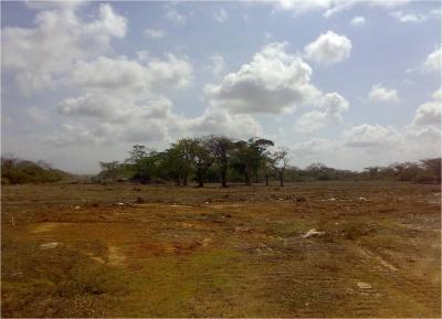 Terreno dentro de Ciudad Flamingo