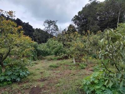 Terreno 22,000 vrs para desarrollo en Km 16.5 CES