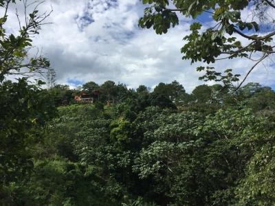 Terreno de 15 tareas en Jarabacoa mata de Platano Cerca del salto de Jimenoa US$9,900 la Tarea
