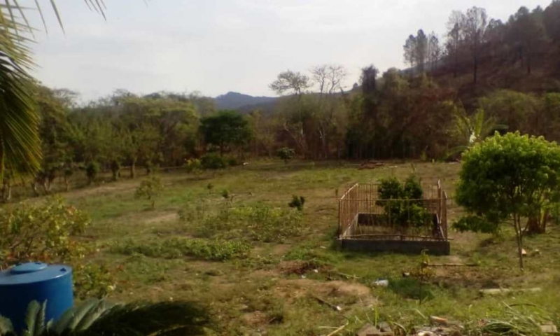 Nirgua - Haciendas y Fincas