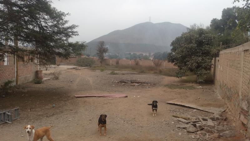Terreno en venta Carabayllo / Puente Piedra