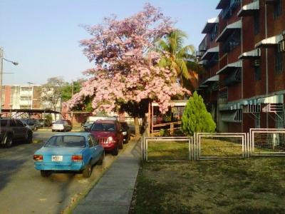 WILLIAM ALVAREZ Vende apartamento en la Urbanización Fundación Maracay II