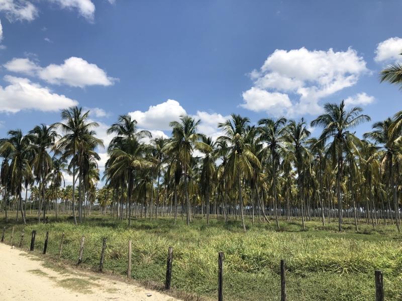 Boca de Aroa - Haciendas y Fincas