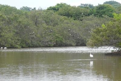 Se vende lindo terreno en Bajamar frente al mar contacta CityMax
