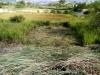 - Terrenos y Parcelas
