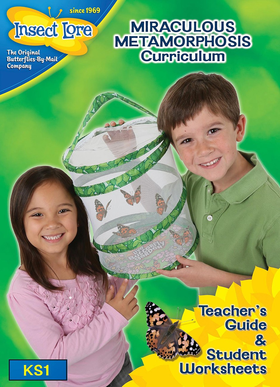 New Butterfly Curriculum Early Years