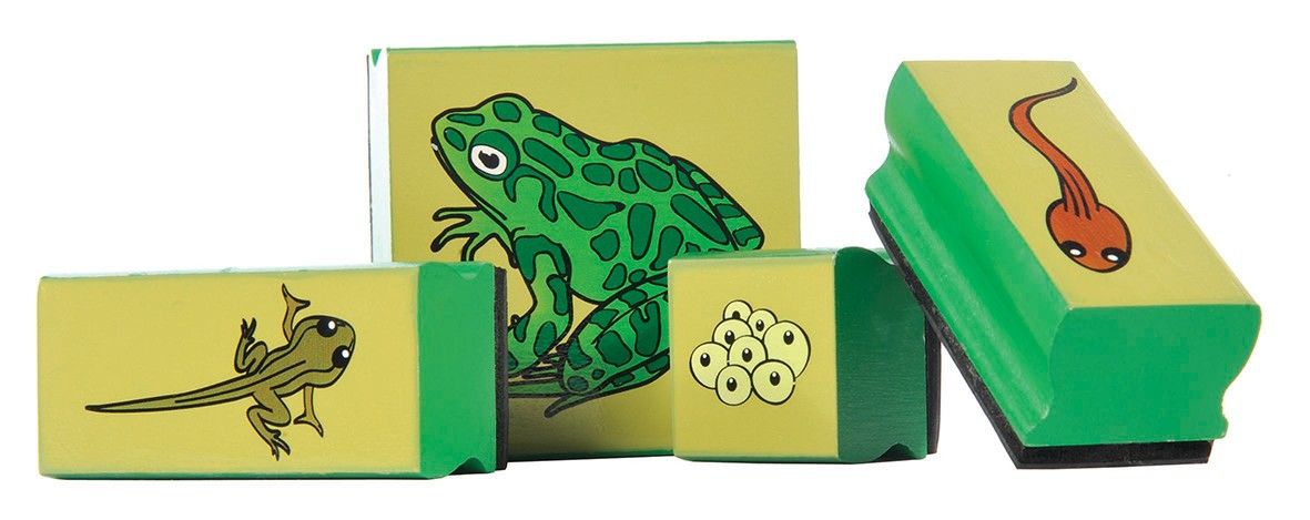 Frog Lifecycle Stamps