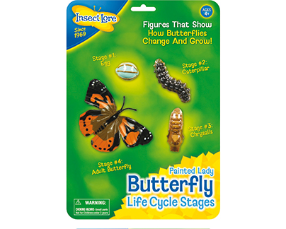 Painted Lady Lifecycle Stages