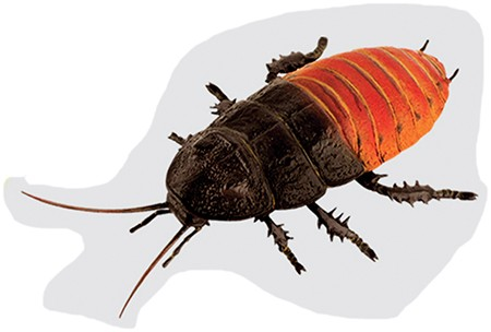 Cockroach Diet - to feed 5 roaches