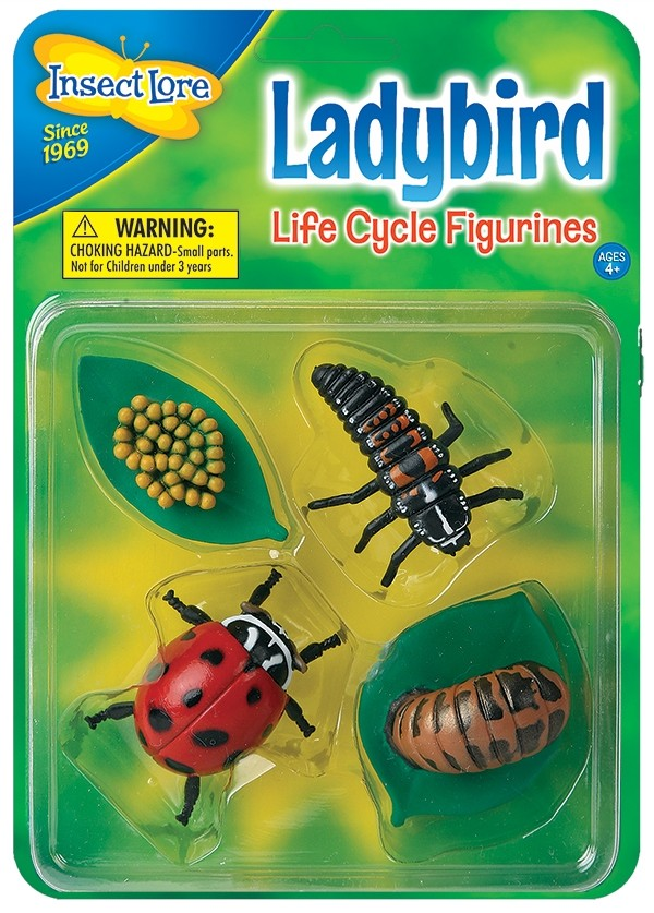 Ladybird Lifecycle Stages