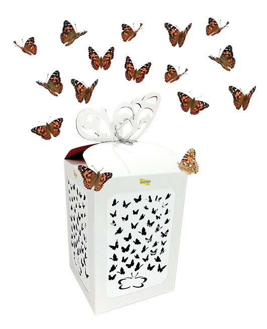 Butterfly Celebration - 50 Live Butterfly Release for Special Occasions!
