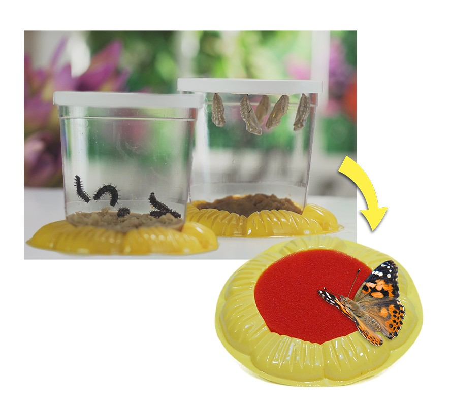 Cup Holder & Butterfly Feeding Station Flower