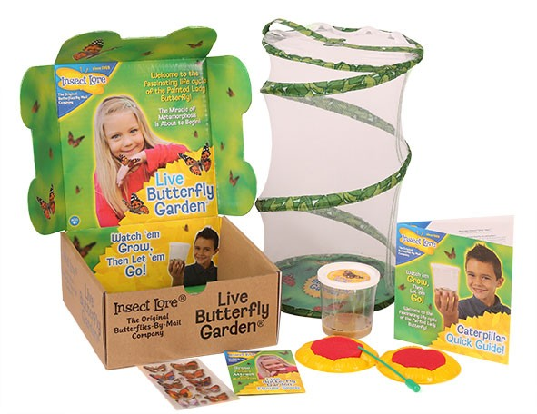 insect lore give the gift of butterflies - Live Butterfly Garden