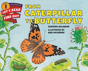 Painted Lady Caterpillar to Butterfly Book