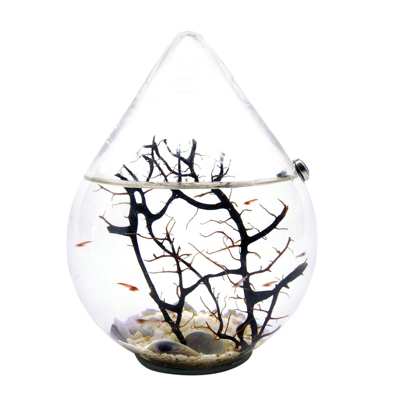 Water Droplet Ecosystem