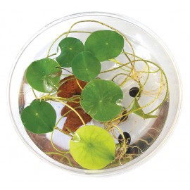 Grow Your Own Lilypad