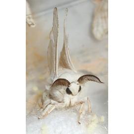 Silkworm Rearing Kit