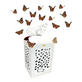 Butterfly Celebration - 200 Live Butterfly Release for Special Occasions!