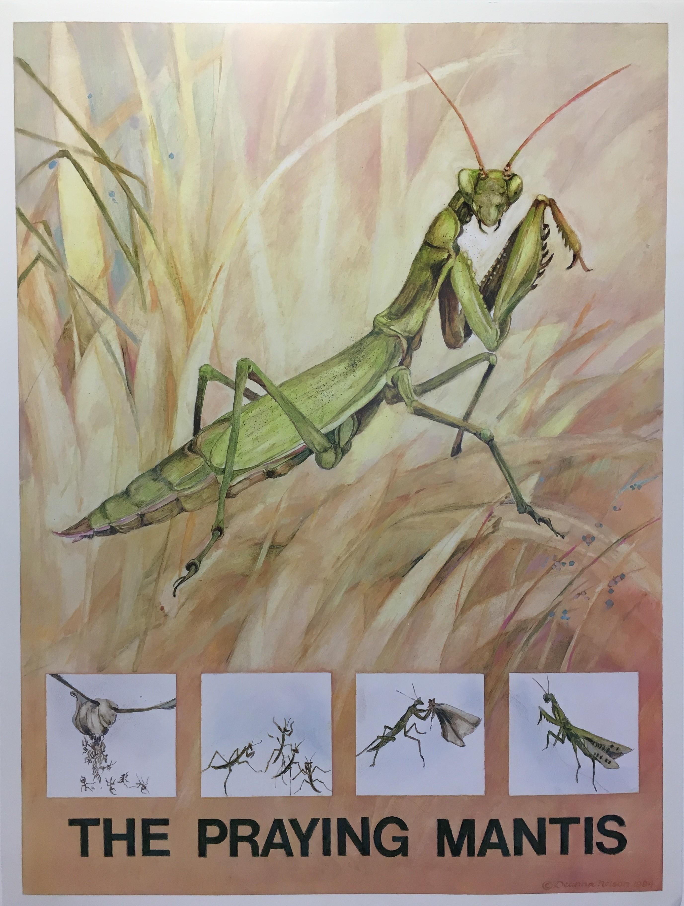 The Minibeasts (book 2) Praying Mantis.