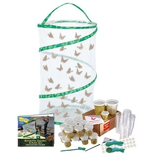 Butterfly Garden SCHOOL KIT (33 Caterpillars)