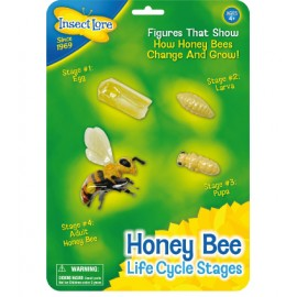 Honey Bee Lifecycle Stages