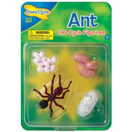 Ant Lifecycle Stages