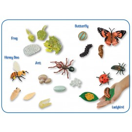 Life Cycle Stages Figurines Collection
