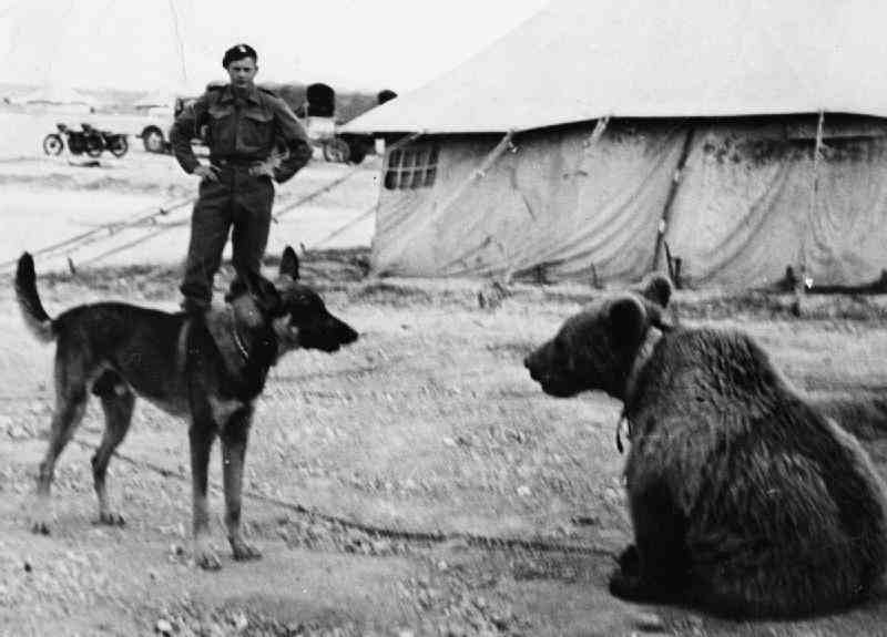 Wojtek enjoyed the company of other animals.