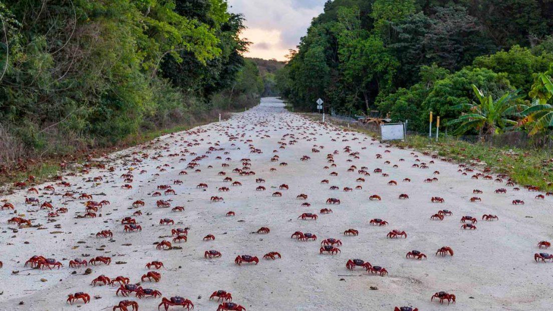 crabs-tothesea