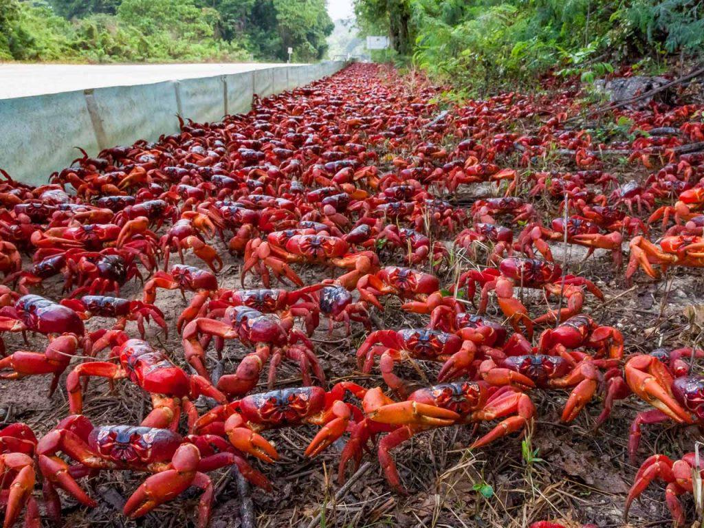 crabs-street