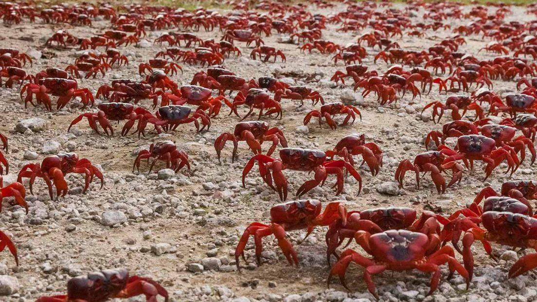 crabs-backtoforrest