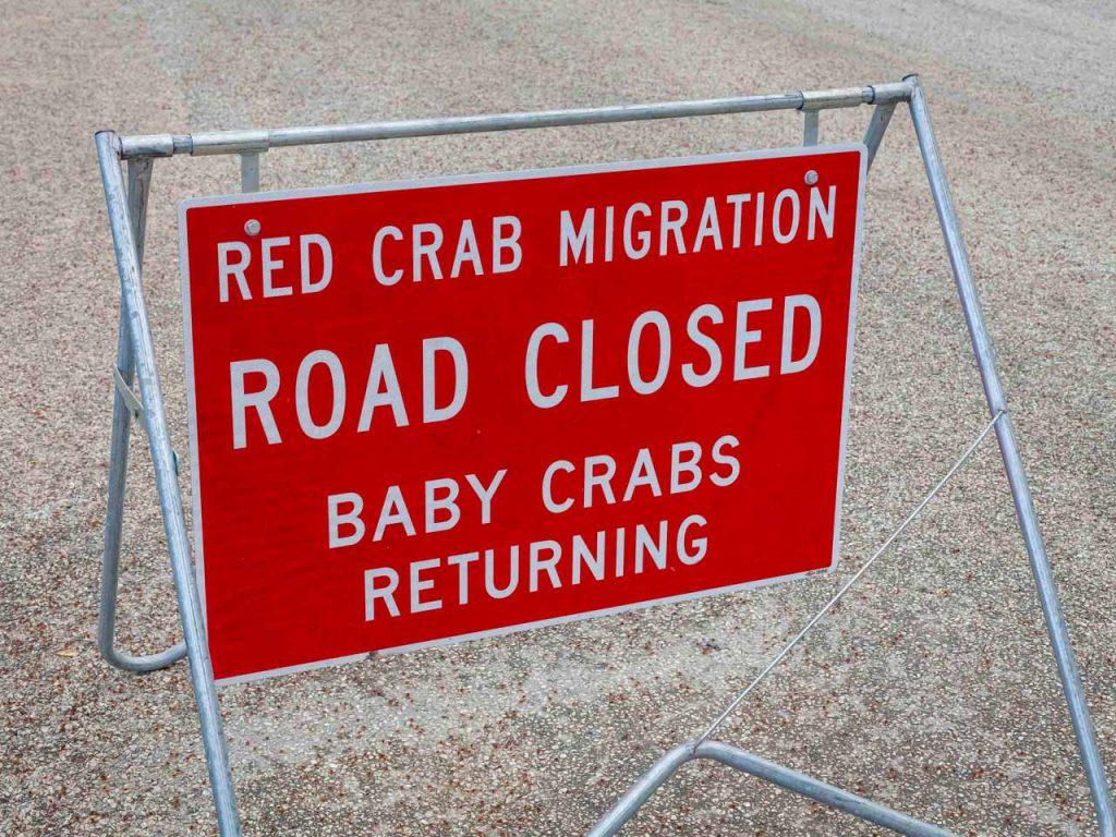 crabs-babies-5