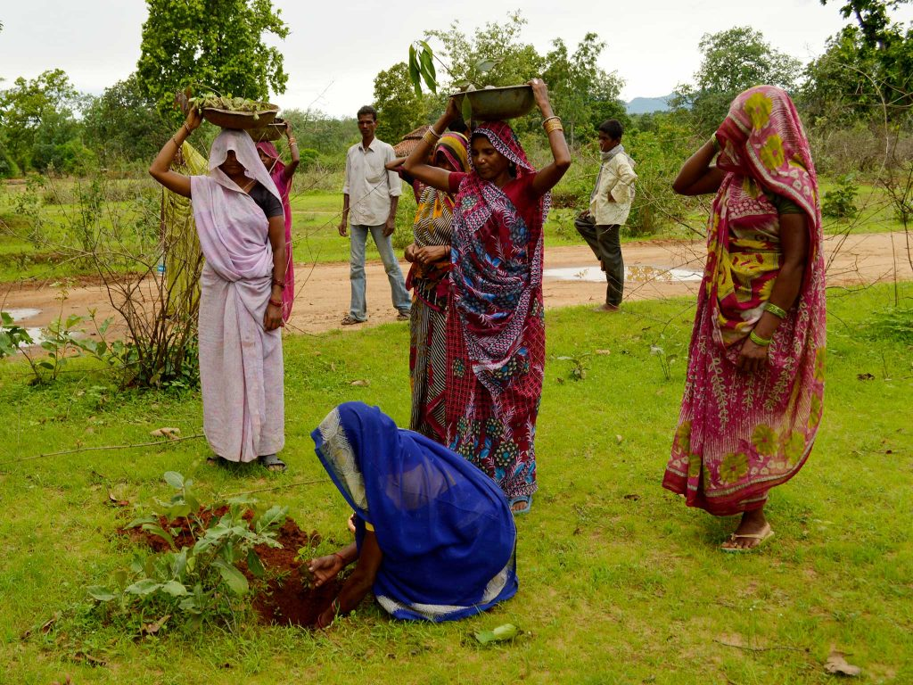 Indian women planting trees