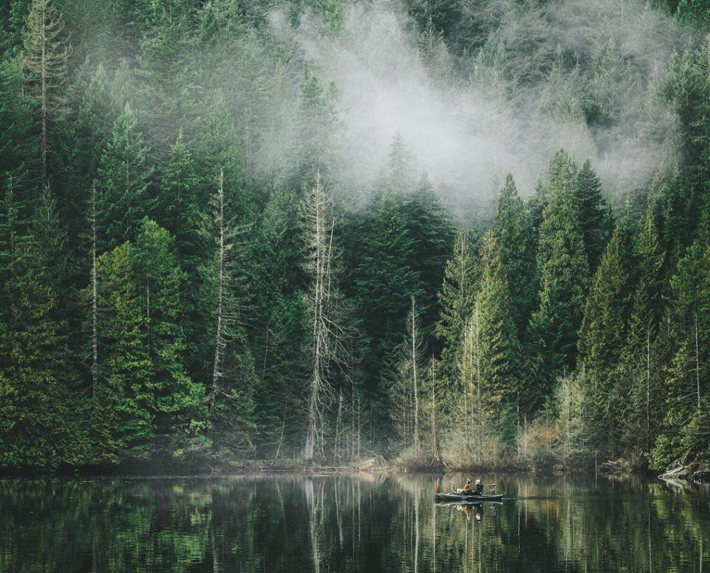 Temperate Rainforest Canada