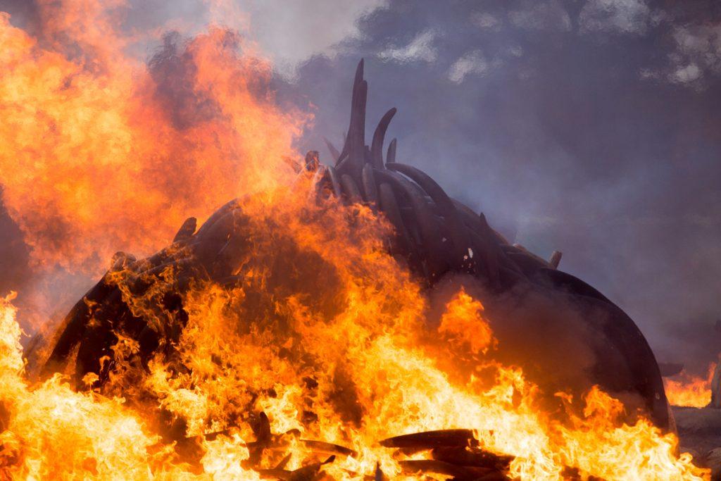 Burning Ivory