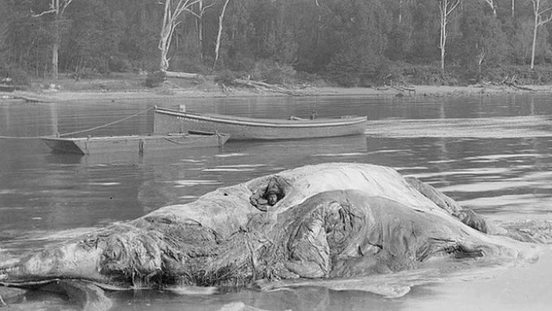 bizarre medical practices history whale carcass rheumatoid arthritis