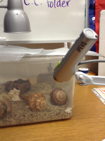Love using the P2V to watch the hermit crabs