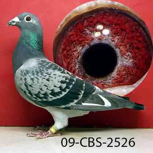 09-CBS-2526 BCSP Hen