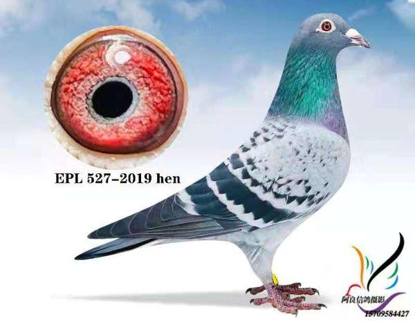 EPL 527-2019 BCH