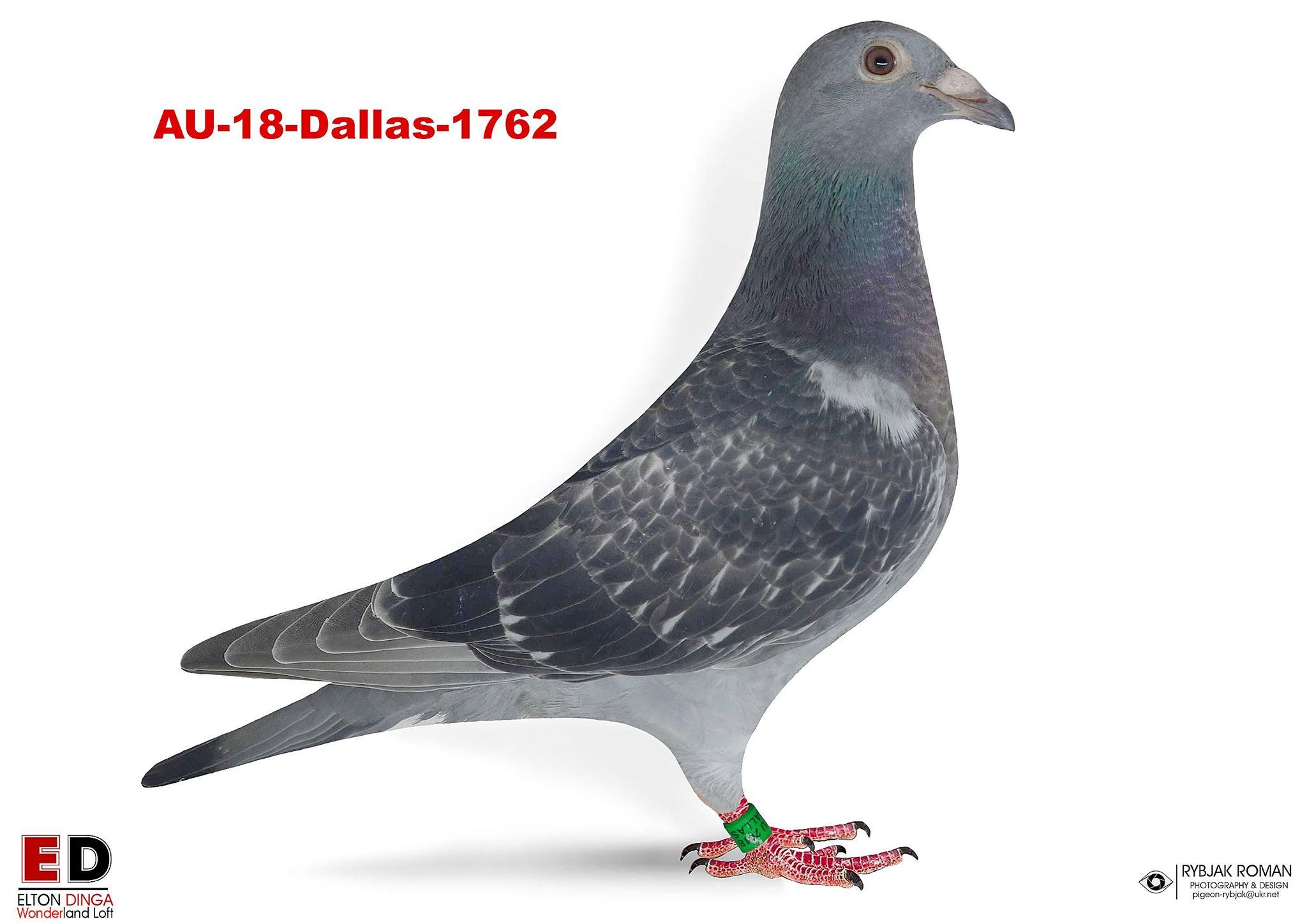 AU-1762 Hen, Vercammen x Klaas