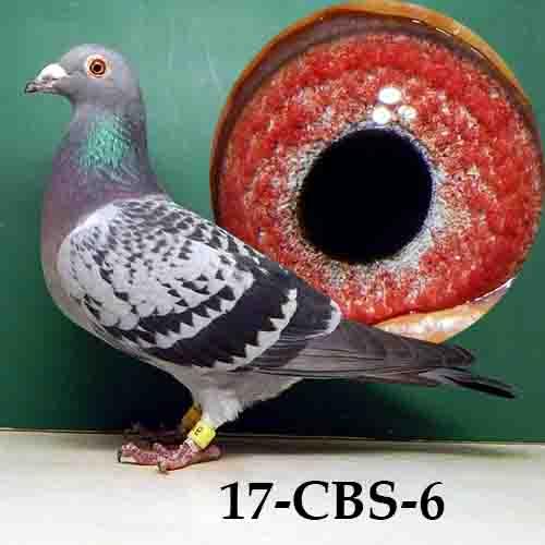 17-CBS-6 BC/HEN