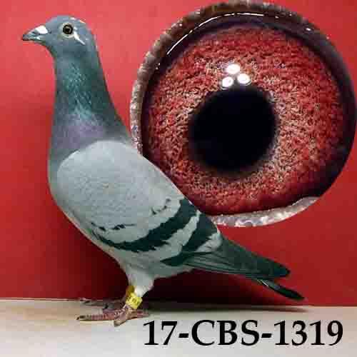 17-CBS-1319 BBSP/HEN