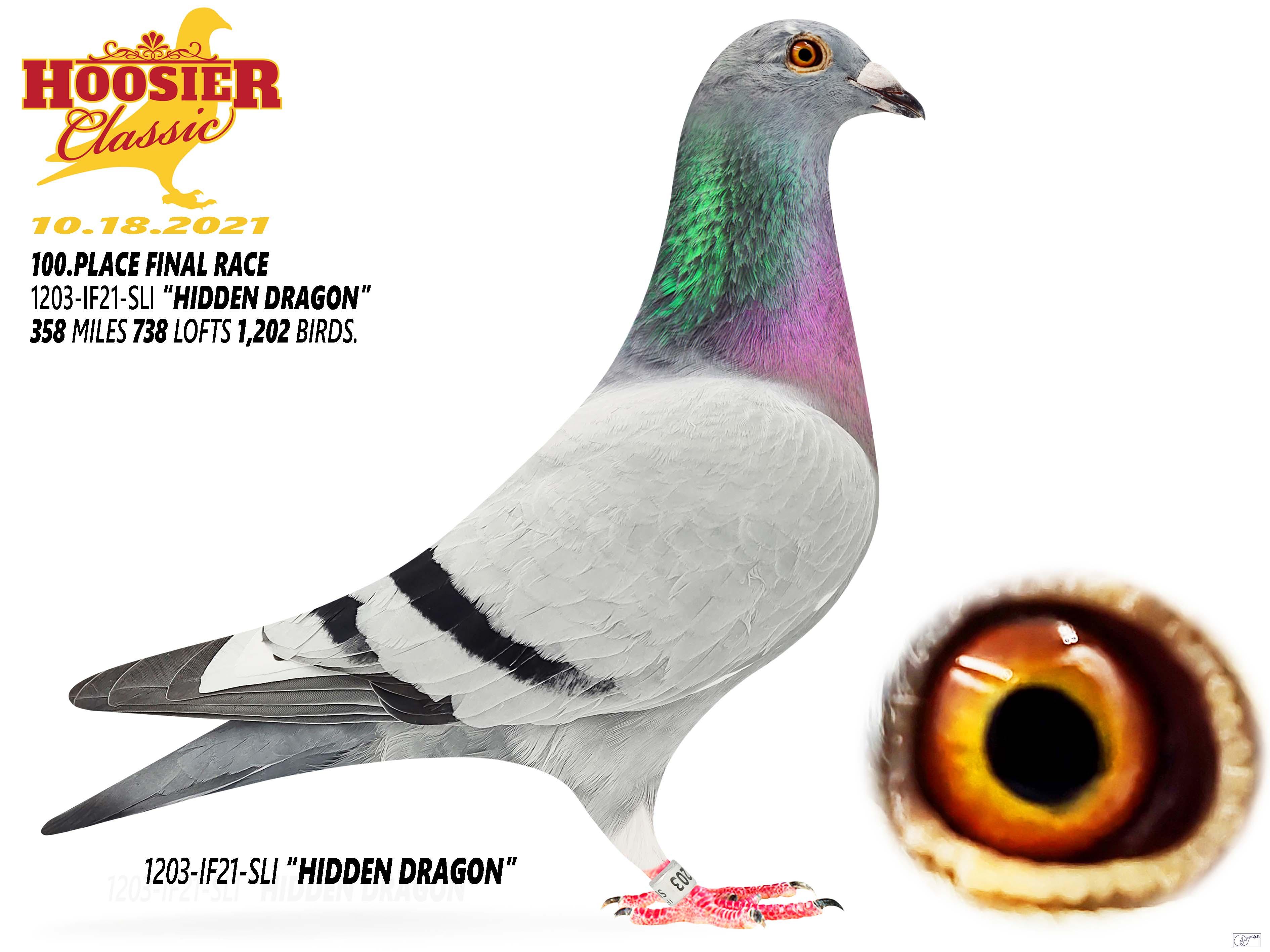 100thPlace 2021 Hoosier Classic Danowski Loft - NY1203-IF21-SLIHidden Dragon  BB Flt C