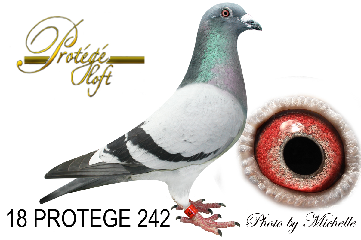 IF 18 PROTEGE 242 BB W/F COCK