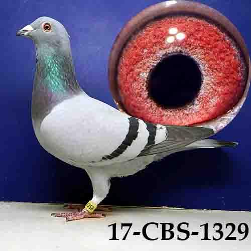 17-CBS-1329 BB/HEN