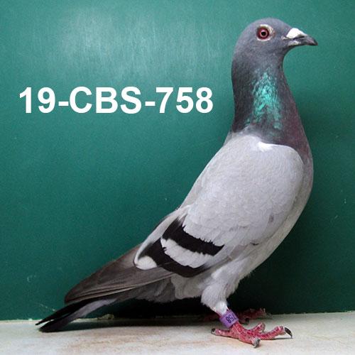 19-CBS-758 BB H