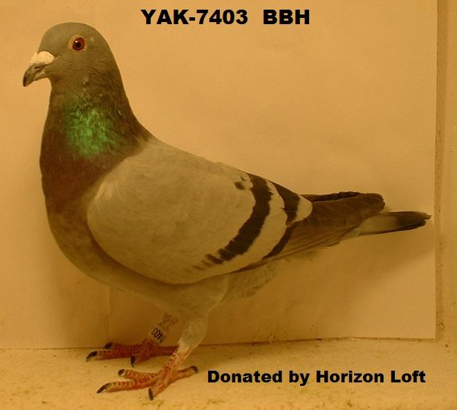 Yak-7403/17 BBH