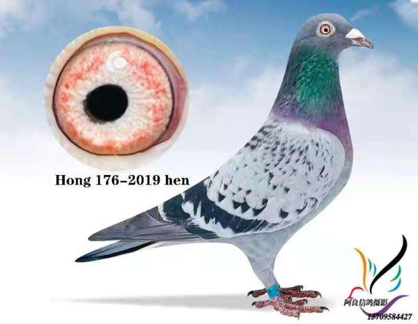 HONG 176-2019 BCH