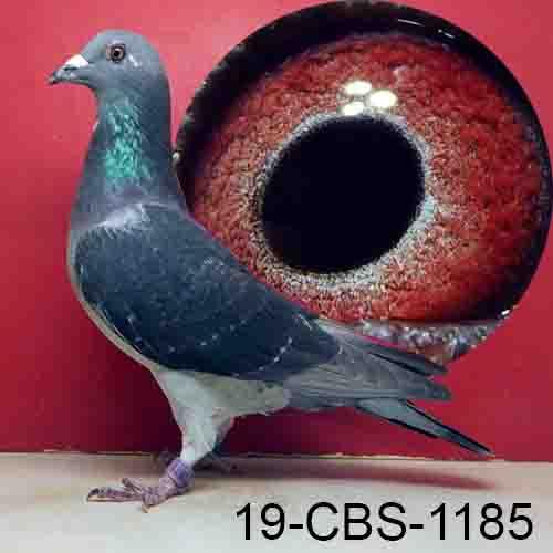 19-CBS-1185 DCWF Hen